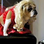 THE LITTLE RED DRESS PROJECT: Making of Dog Couture
